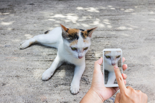 taking photo of cat on smartphone