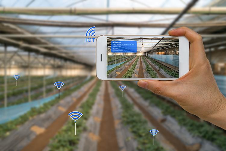 smartphone on farm